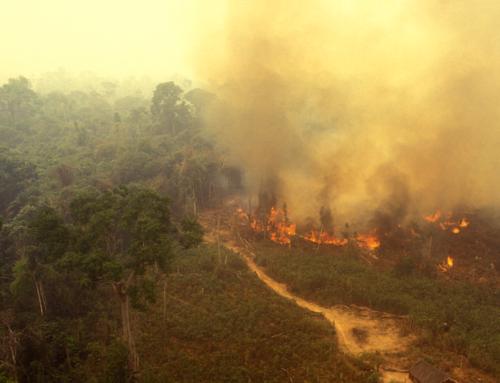 A Amazônia e a metástase Bolsonaro